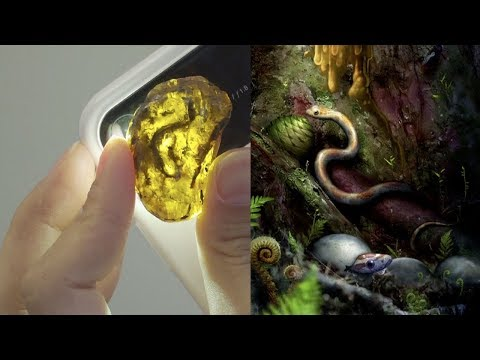 Xiaophis myanmarensis - the first fossilized snake preserved in amber