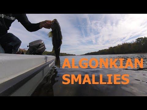 Upper Potomac River Smallmouth Fishing