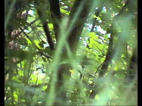 картинки для птичьих звуков
