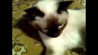 Венера моя кошка