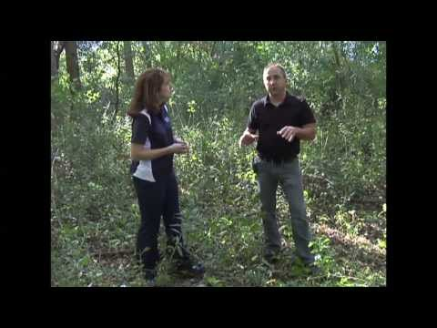 """Removing Buckthorn - A""""how to"""" guide from the Coon Rapids City Forester"""