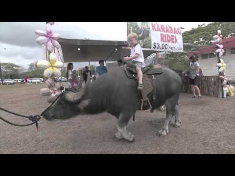 28th Guam Micronesia Island Fair