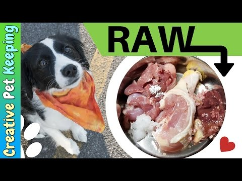 How to feed a cats and dogs RAW MEAT | Prey Model #RawDiet