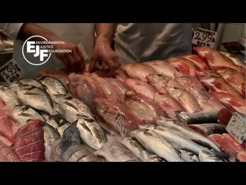 .如何使用區塊鏈來打擊非法捕魚!