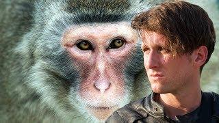 Exposing the Chinese Monkey Poachers of Hong Kong