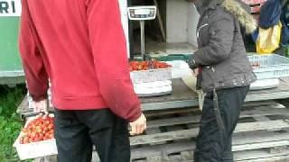 Работа в Финляндии сбор клубники(Работа в Финляндии сбор клубники., 2012-01-27T07:48:25.000Z)