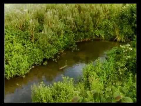 Youtube filmek - Csodabogarak - A hernyó, aki látni akarta az óceánt (2.évad 5.rész)