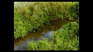 Csodabogarak - A hernyó, aki látni akarta az óceánt (2.évad 5.rész)
