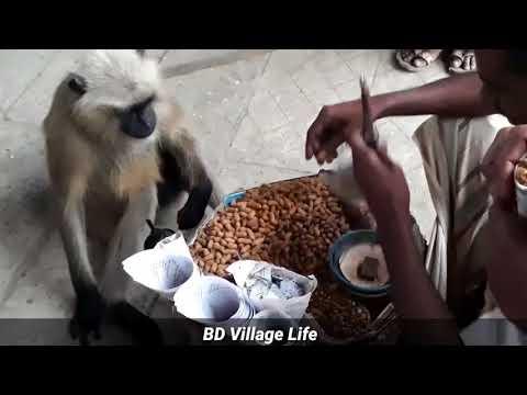 Funny monkey videos / Monkey and human love story / Bd village life