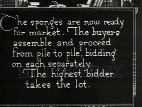 The Bahamas sponge industry in 1921