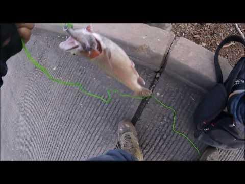 Colorado Winter Trout Fishing (Warning Fish Harvested)