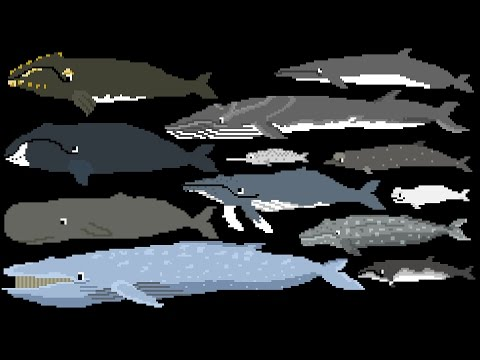 Whales - Animals Series - The Kids' Picture Show (Fun & Educational Learning Video)