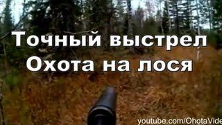 Точный выстрел. Охота на лося видео 2012-2013 Moose hunting in Russia.