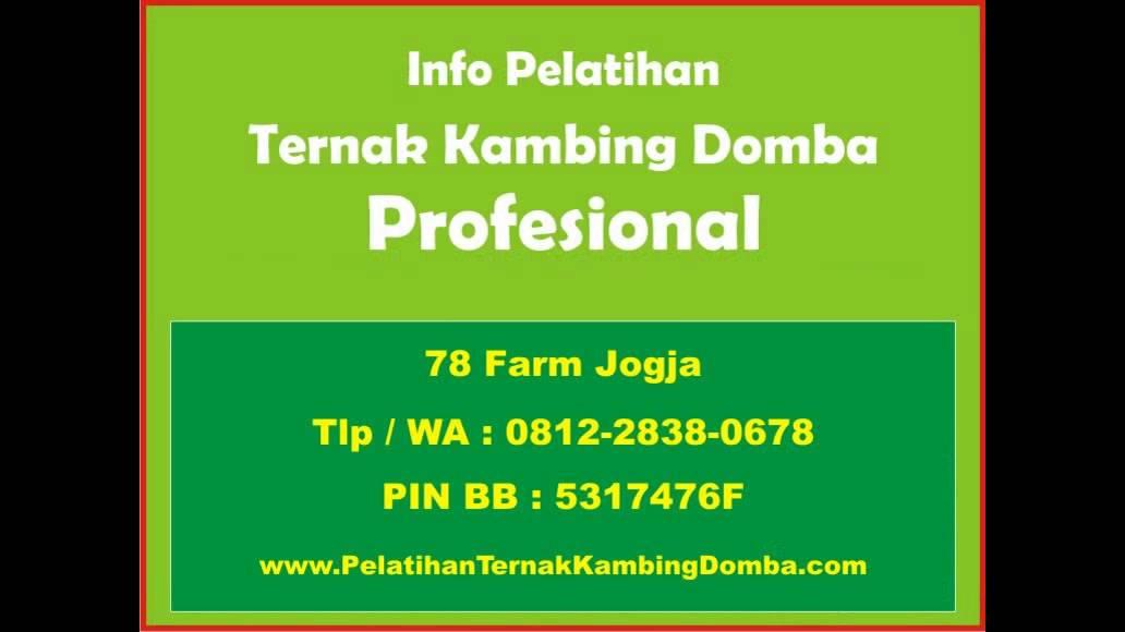 Download 0812-2838-0678, Pelatihan Budidaya Kambing PE Kaligesing