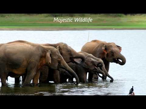 Walkers Tours - Sri Lanka  HD