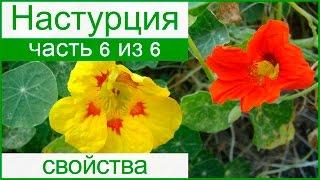 видео Морковная ботва: лечебные свойства и противопоказания