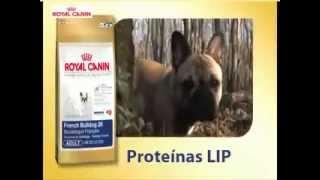 Royal Canin Bulldog Frances Nutrition-canal Su Mascota
