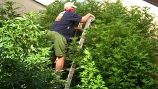carport greenhouse 2010 video 7