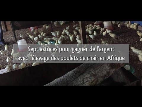 Sept astuces pour gagner de l'argent avec l'élevage des poulets de chair en Afrique.