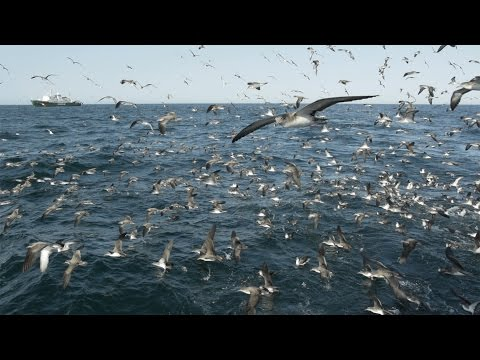 West Africa - Overfishing