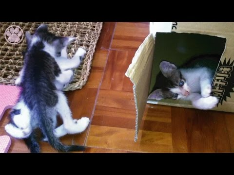 子猫の喧嘩が本気で母猫オロオロ「生後40日目」子猫がかわいい仔猫を産みました!