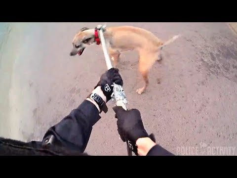 Bodycam Shows Mesa Police Officer Rescuing Dog From Canal