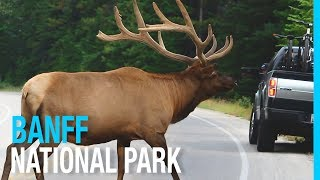 banff national park lake louise rv life in canada