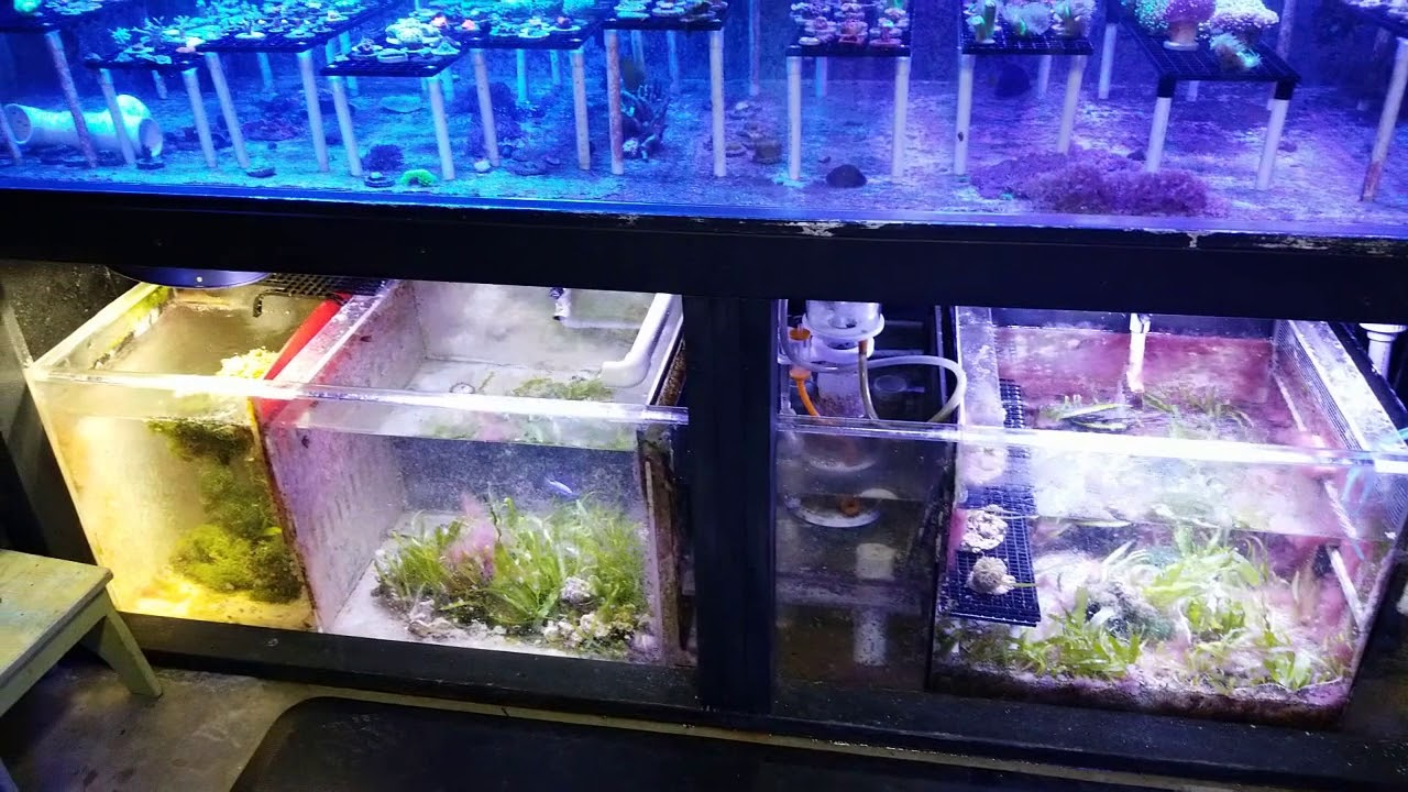 Trigger Systems Emerald ATO Reservoir Tank 5-10 gallon Reef and Marine tank