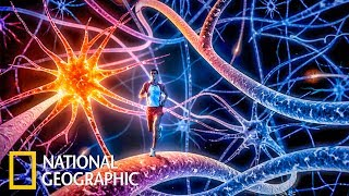 Невероятное тело человека (National Geographic)