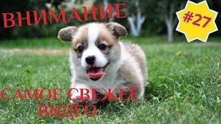 Приколы про животных Смешное видео про котов собак и не только Выпуск 27