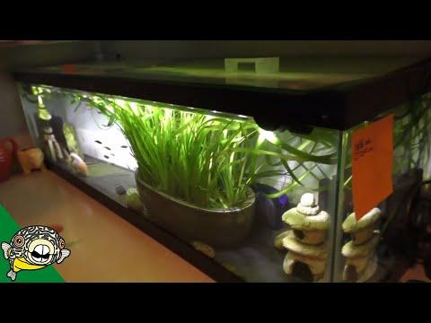 Fahaka Puffer Fish Room Tour - Aquarium Co-Op