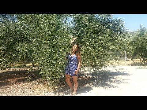 Vem comigo conhecer uma fábrica de azeite de oliva extra virgem!