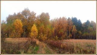 Золотая осень | ГРИБЫ еще растут, но с каждым днём их всё меньше и меньше | Грибы в Октябре