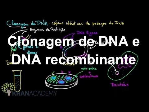 Clonagem de DNA e DNA recombinante | Biotecnologia | Biologia | Khan Academy