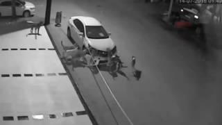 В Турции бродячие собаки раскурочили машину