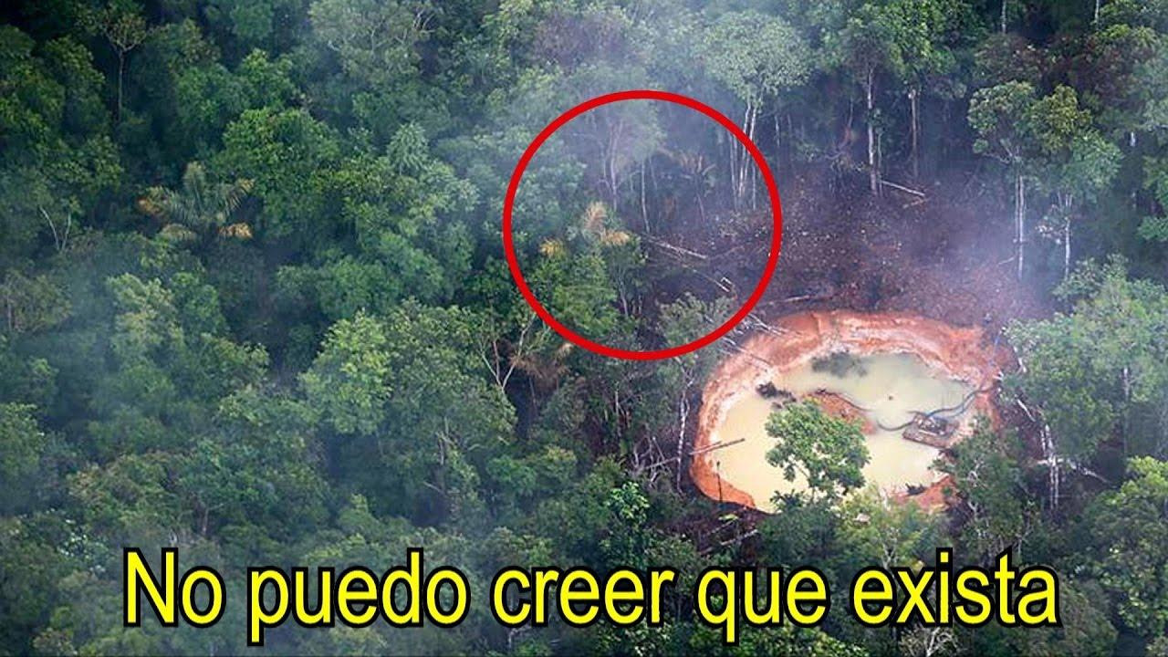 En esta selva se esconde el insecto m s extra o del planeta dicen que es extraterrestre youtube - Mas goy fornells de la selva ...