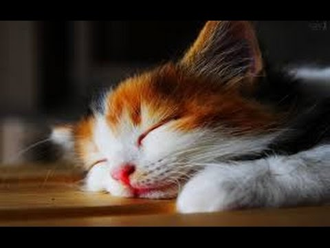 Funny cat vines – cats with sound effects compilation 2015