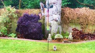Amazing Squirrel Proof Bird Feeder Spectacularly Fails