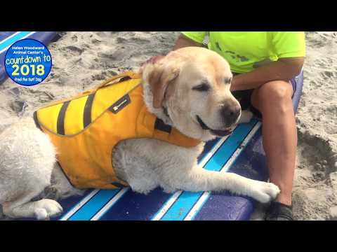 Fred the Surf Dog Conquers Cancer