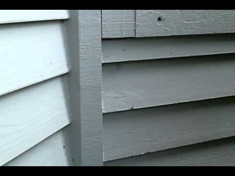Wasps In Siding Of My House Architectural Designs