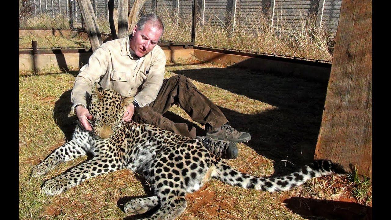 Big Cats Hunting