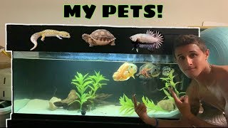 HOUSE TOUR of all MY PETS!!