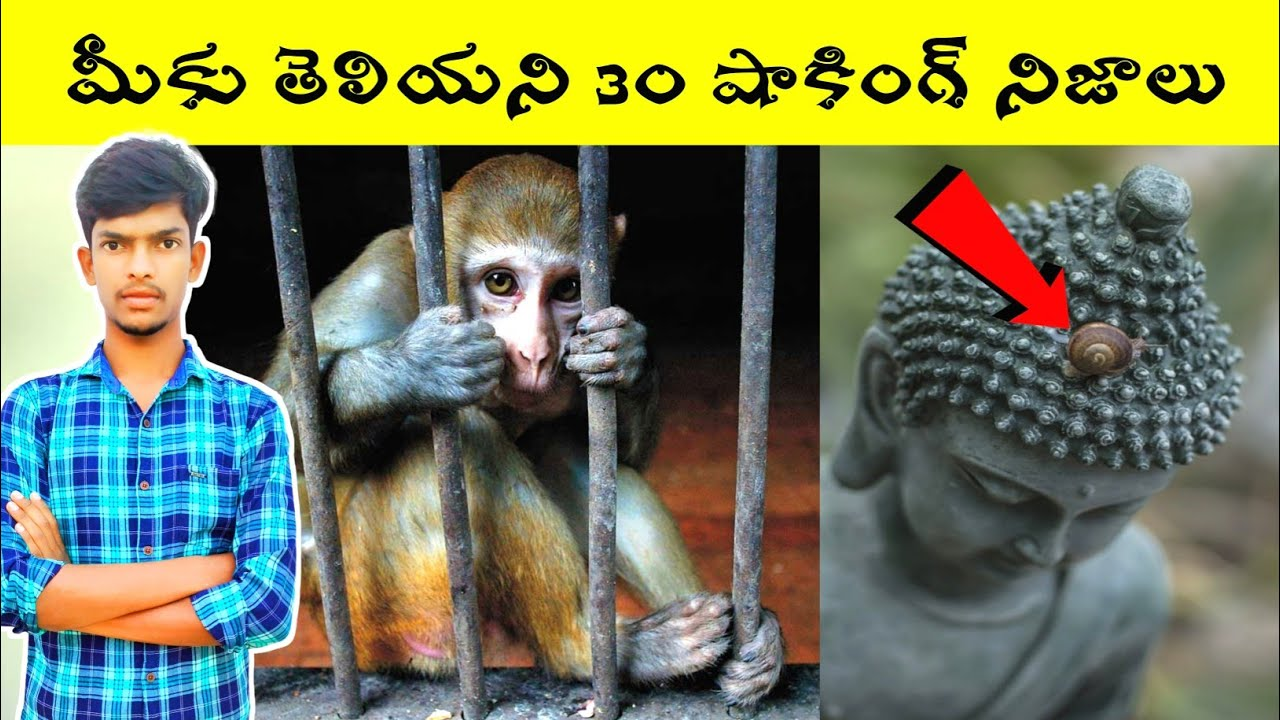 Top 30 Amazing and Interesting Facts in Telugu