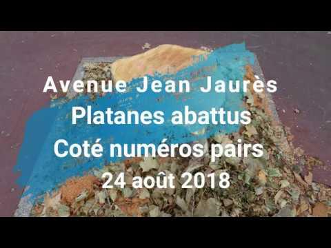 Montrouge, Avenue Jean Jaurès - 24 août, Platanes abattus côté numéros pairs