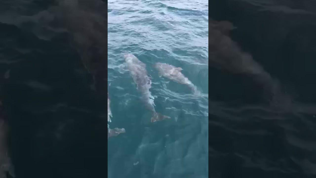Дельфины в черном море - YouTube