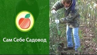 Выкапываем саженцы и прикапываем их на хранение.(http://www.samsebesadovod.ru Евгений Федотов и Роман Врублевски показывают, как правильно выкапывать саженцы садовых..., 2011-10-12T12:42:46.000Z)