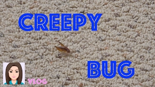 Vlog 404: Creepy Bug In My Basement