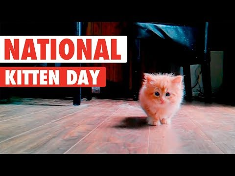 Most Adorable Kittens | National Kitten Day 2017