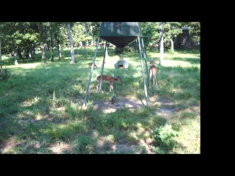 Home Land For Sale Idabel Oklahoma McCurtain County Garvin 87 acres
