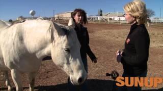 Horses: Breeding & Foaling (1/31/15)